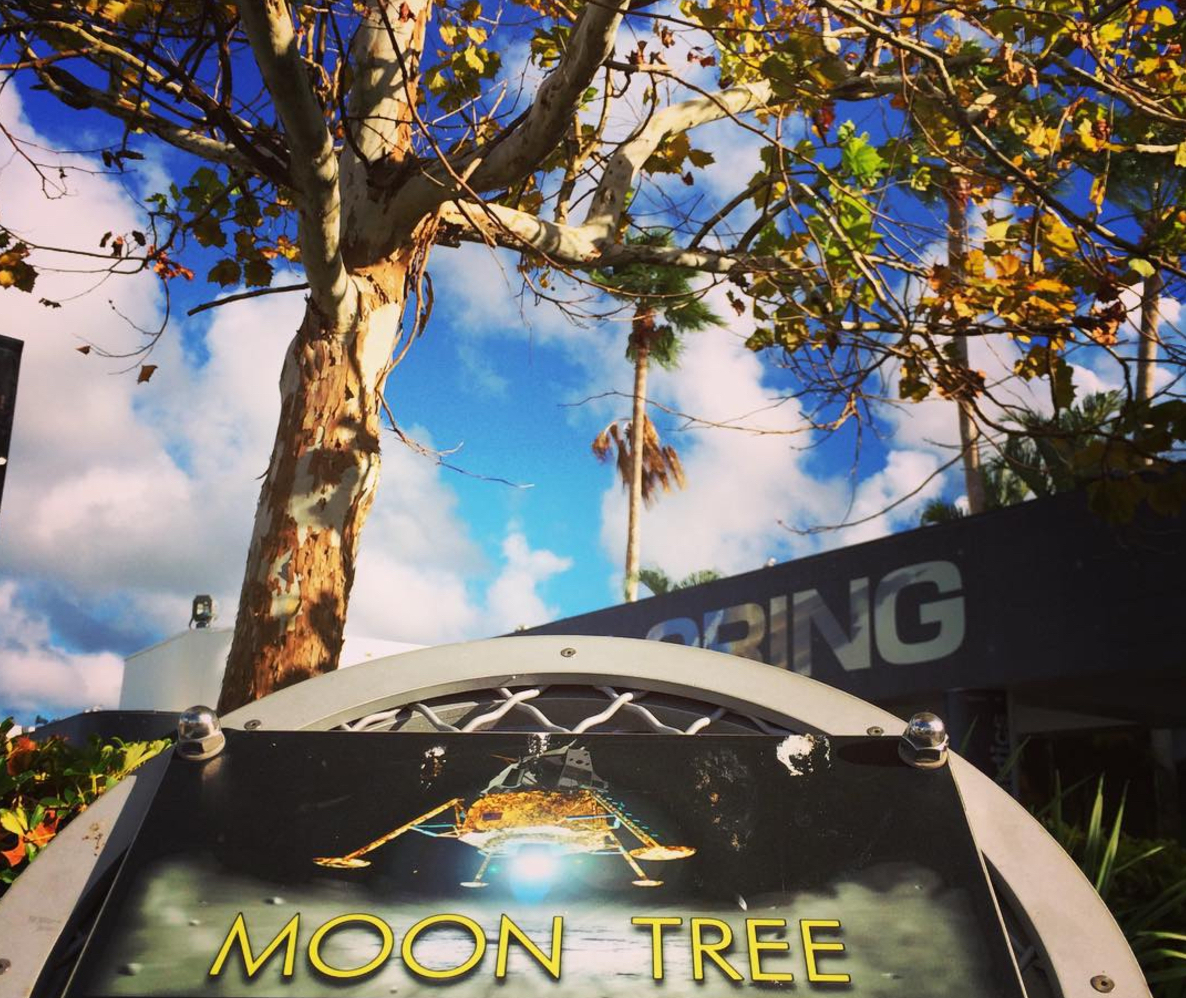 Moon Tree at Kennedy Space Center